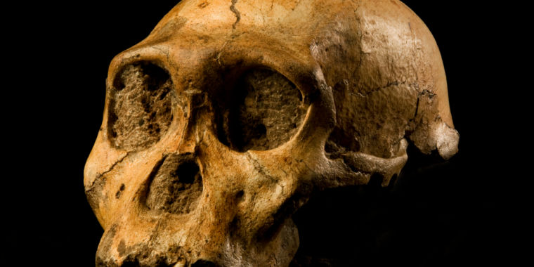 We probably don't descend from Australopithecus sediba