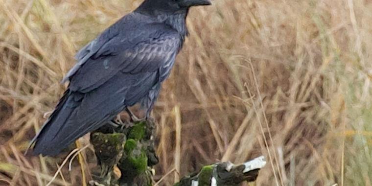 A sad raven bums out its friends