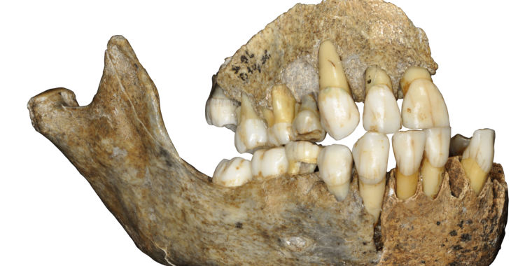 Neanderthals' history is as complicated as ours