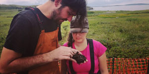 New archaeological layer discovered at L'Anse aux Meadows